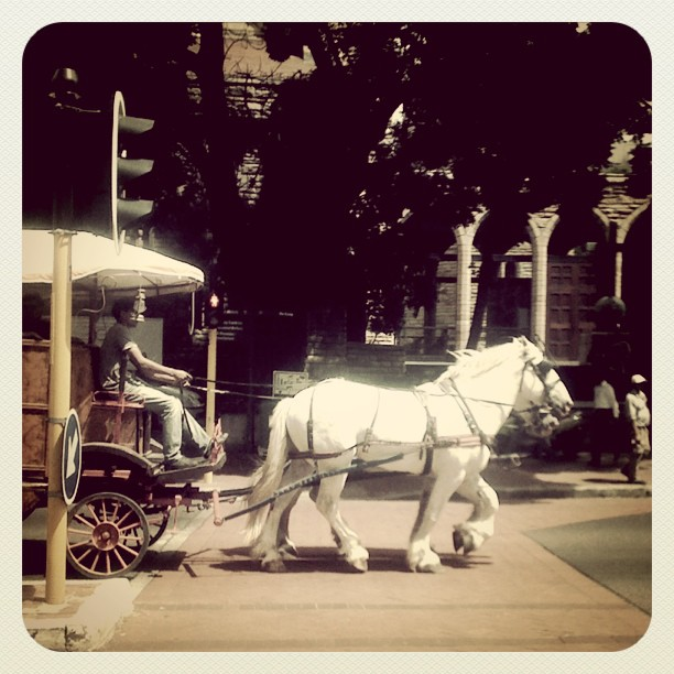 Horse and carriage in Wale Street. Photo by Imar Krige