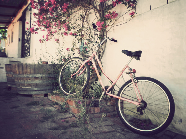 Perfectly posed: Pink bike and bougainvillea. Photo Nadia Krige