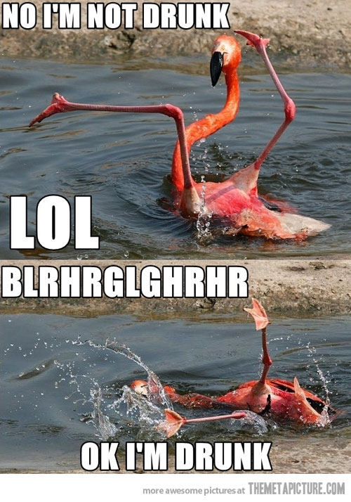 funny-flamingo-weird-legs-water